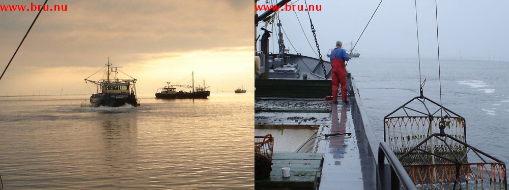 mosselvissen-op-het-wad-001