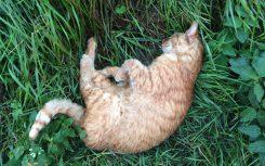 dode-kat-gevonden-steinstraat